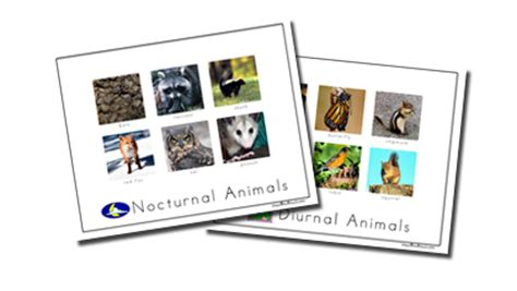 nocturnal animals preschool lesson plans nocturnal animals sort spell out loud 418