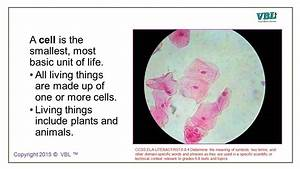 Plant And Animal Cells 1