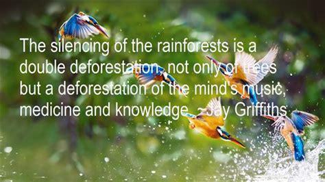 rainforest quotes   famous quotes  rainforest