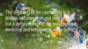 Rainforest Quot... Amazon Jungle Quotes