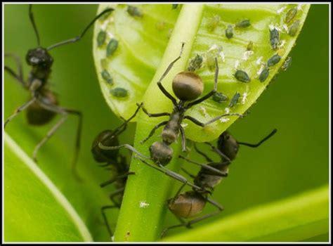 hausmittel gegen ameisen im garten garten house und