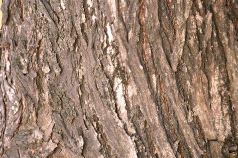 tree bark texture tree bark texture free stock photo public domain pictures