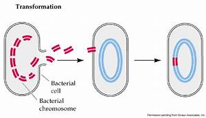 Genetic Transfer In Prokaryotes