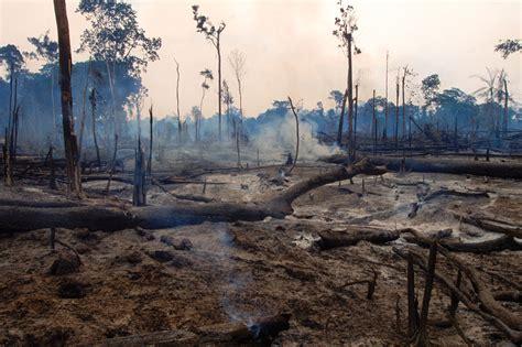 RAW Rainforest Awareness Worldwide A non profit