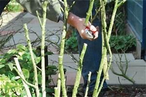 Taille De L Hibiscus : entretien des hibiscus gamm vert ~ Melissatoandfro.com Idées de Décoration