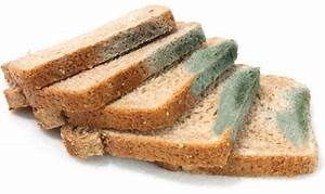 I Ate Moldy Bread What Will Happen