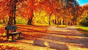 Cute Autumn Leaves HD Wallpapers.
