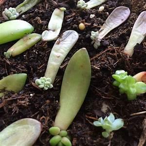 Bouture Plante Verte : comment bouturer des plantes succulentes garden paradise boutures jardins et plante jardin ~ Melissatoandfro.com Idées de Décoration