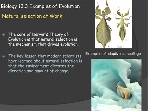 Ppt Biology 133 Examples Of Evolution Powerpoint