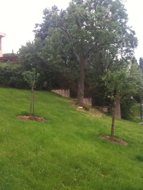 bouygues immobilier si鑒e social mipygreen les espaces verts comestibles de la résidence les fontanelles mipygreen