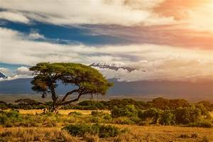 Kilimanjaro: the Highest Mountain in Africa