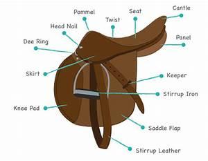 Identify Horse Saddle Types Play The Name The Saddle Parts