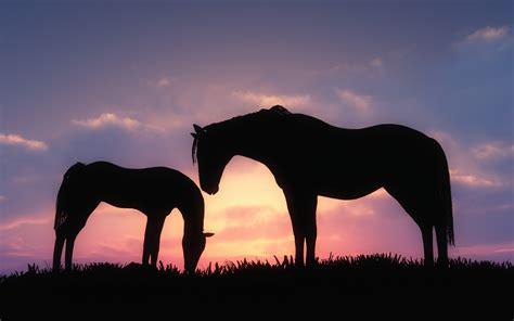 art horses foal sky sunset wallpapers hd desktop