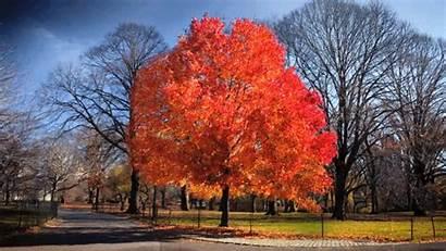 Tree Gifs Fall Changing Road Trip Seasons