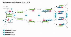 File Polymerase Chain Reaction Svg