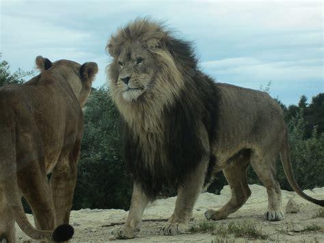 Safaripark Von Sigean  Abenteuer Pur!  Mee(h)r Erleben