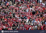 Fans of the german second league soccer club 1, FC koeln ...