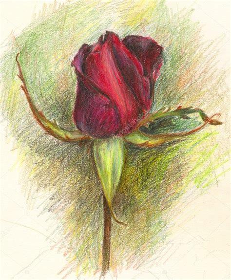 fiori disegni disegni fiori colorati a matita migliori pagine da
