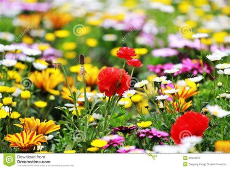 Wilde Blumen Im Garten Stockfoto Bild Von Floral, Pink