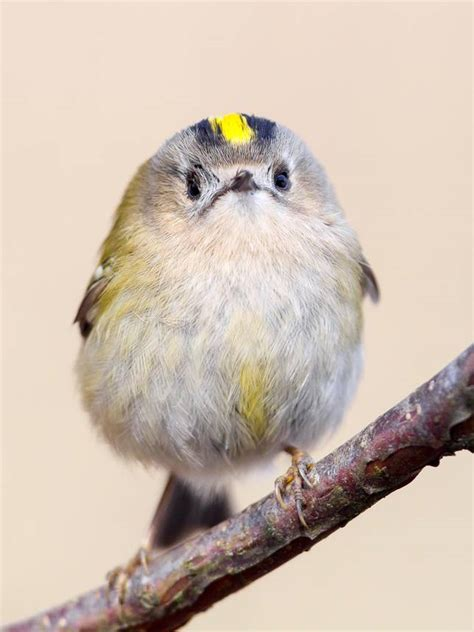 9 of the world s smallest birds mnn mother nature network