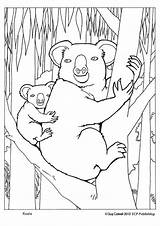 Koala Coloring Pages Colouring Australian Animals Sheets Animal Australia Bear Koalas Adult Template Aboriginal Printable Books Close Templates Drawings Lovely sketch template