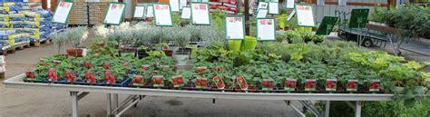 c est le moment de planter des fraisiers jardinerie du jangoux