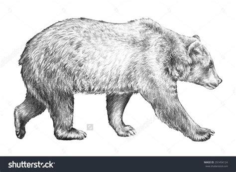 ideas  bear sketch  pinterest bear drawing