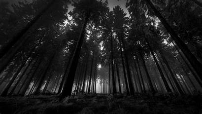 Landscape Nature Trees Desktop Wallpapers Backgrounds Mobile