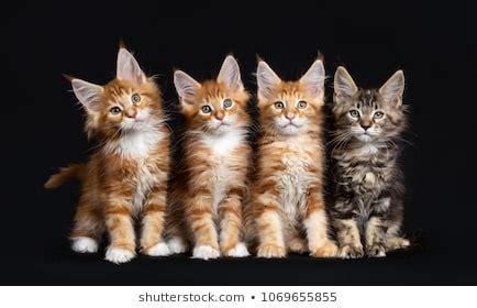 General Cat