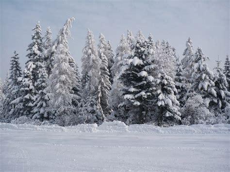 landscaping in winter winter landscape by alancrazy on deviantart