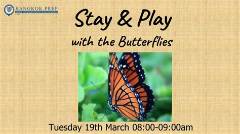 reception stay play butterflies dragonflies grasshoppers