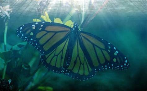 Interessante Ideenfuss Schmetterling by Interessante Fakten 252 Ber Schmetterlinge F 252 R Kinder