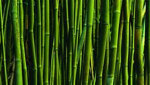 Bamboo HD 1280x720