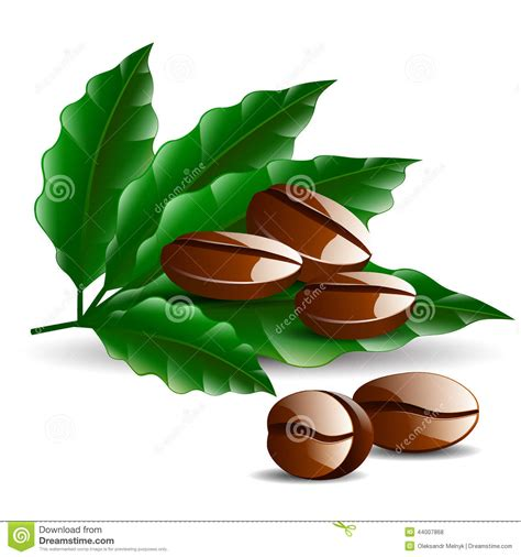 Single Coffee Bean With Leaf Isolated On White Stock Vector   Image: 44007868