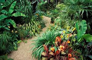 Plan a Tropical Garden with Tropical Plants at Home