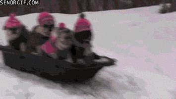 sledding gifs find share  giphy