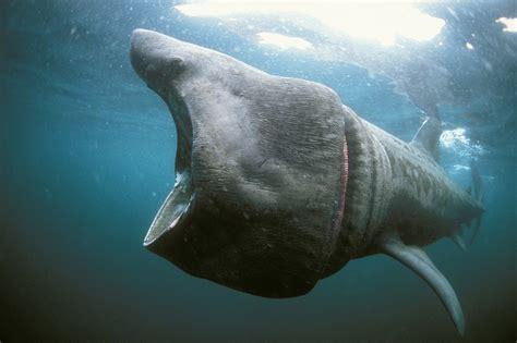 requins au 224 du malentendu