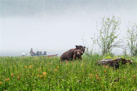 Grizzly Boat Launch by 5 Best Spotting Experiences In Canada
