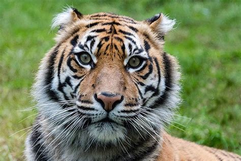 vom aussterben bedrohte tiere