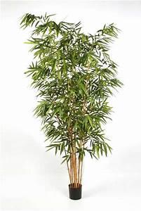 Bambus Pflege Zimmerpflanze : bambus textilpflanzen k nstliche pflanzen kunstpflanzen ~ Frokenaadalensverden.com Haus und Dekorationen