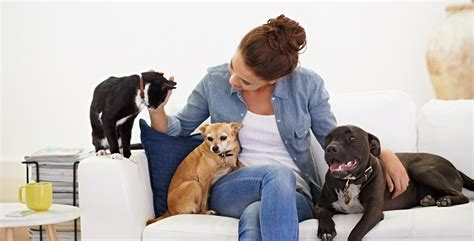 Masseuse Salary by Pet Salary How Much Pet Therapists