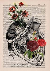 Floral Anatomical Illustrations Breathe New Life Into Old