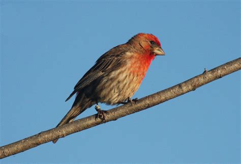 sparrows and songs on pinterest