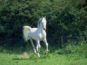riding the white horse – part one of a two-sides to every ...