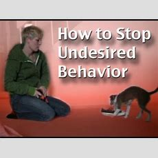 How To Stop Unwanted Behavior The Positive Interrupter  Clicker Dog Training Youtube
