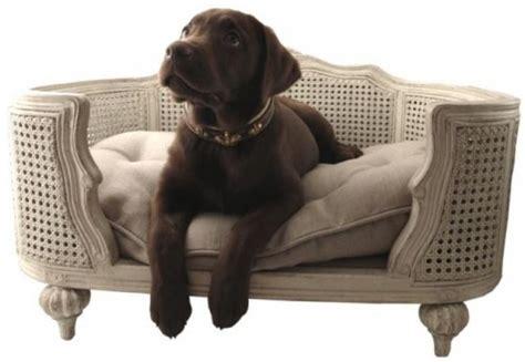 sur le canapé ou dans le canapé zoom sur le canapé pour chien ou arthur paperblog