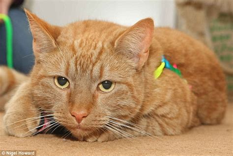 rat poison in cats rory the cat s saved with a transfusion from a