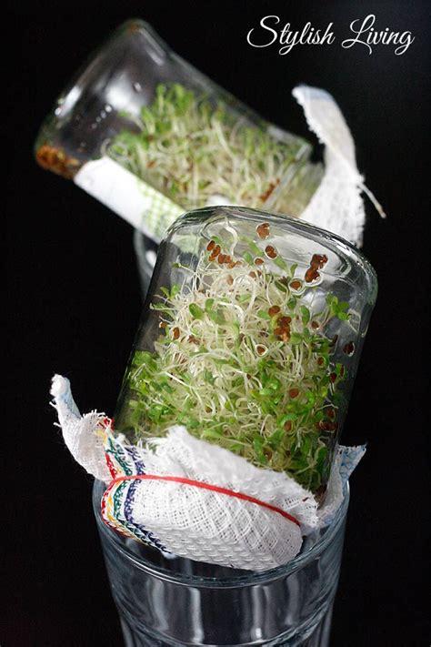 sprossen im glas veganes sandwich mit r 228 uchertofu gem 252 se und alfalfa sprossen stylish living