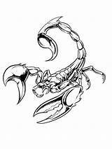 Scorpion Tattoo Coloring Printable Scorpions Drawings Poisonous Tattoos Animals Insects Creepy Escorpion Poison Clock Stencils Seen Signs Gaddynippercrayons Stencil Fish sketch template