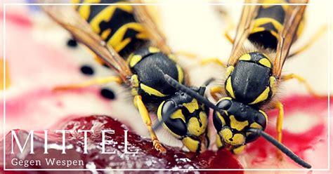 Nelkenöl Gegen Wespen by 7 Wirksame Mittel Gegen Wespen Endlich Ruhe